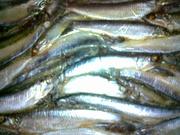 Рыба см столовых сортов