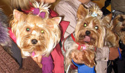 Стрижка собак і котів - Грумінг Центр (Салон краси для тварин)