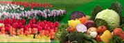 Насіння овочів,  квітів оптом,  виробник Польща.