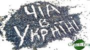 Семена чиа полезные свойства Дрогобич