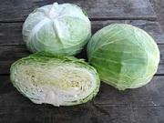 Семена белокочанной капусты Naomi F1 / Наоми F1 фирмы Китано