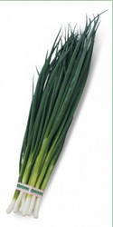 Семена лука на перо Vulcan / Вулкан (Китано)