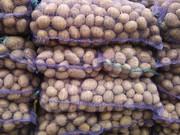 Картошка сорт Беллароза и белые сорта