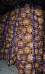 Продаж картоплі сортів  Пікасо,  Рів'єра