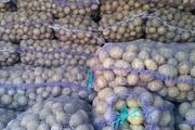 Продам посадкову картоплю доставка новою поштою