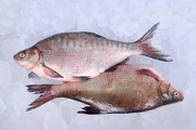 С/м річкова риба оптом.  Ікряна риба.